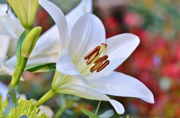 What Kind of Flowers Should I Give to a Grieving Family?